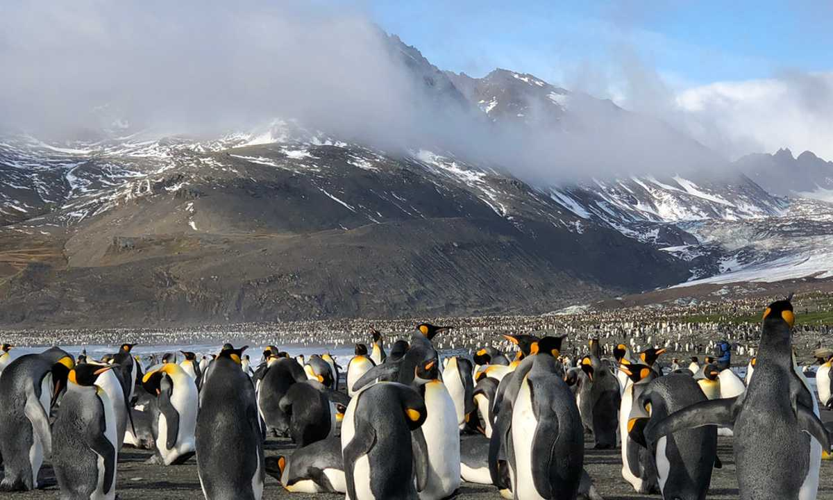 Swo_5_John-Newby_ALL_South-georgia-king-penguins
