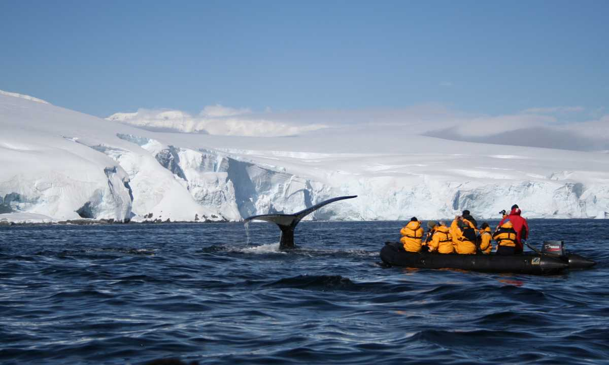AM_3_AM_ALL_whale zodiac