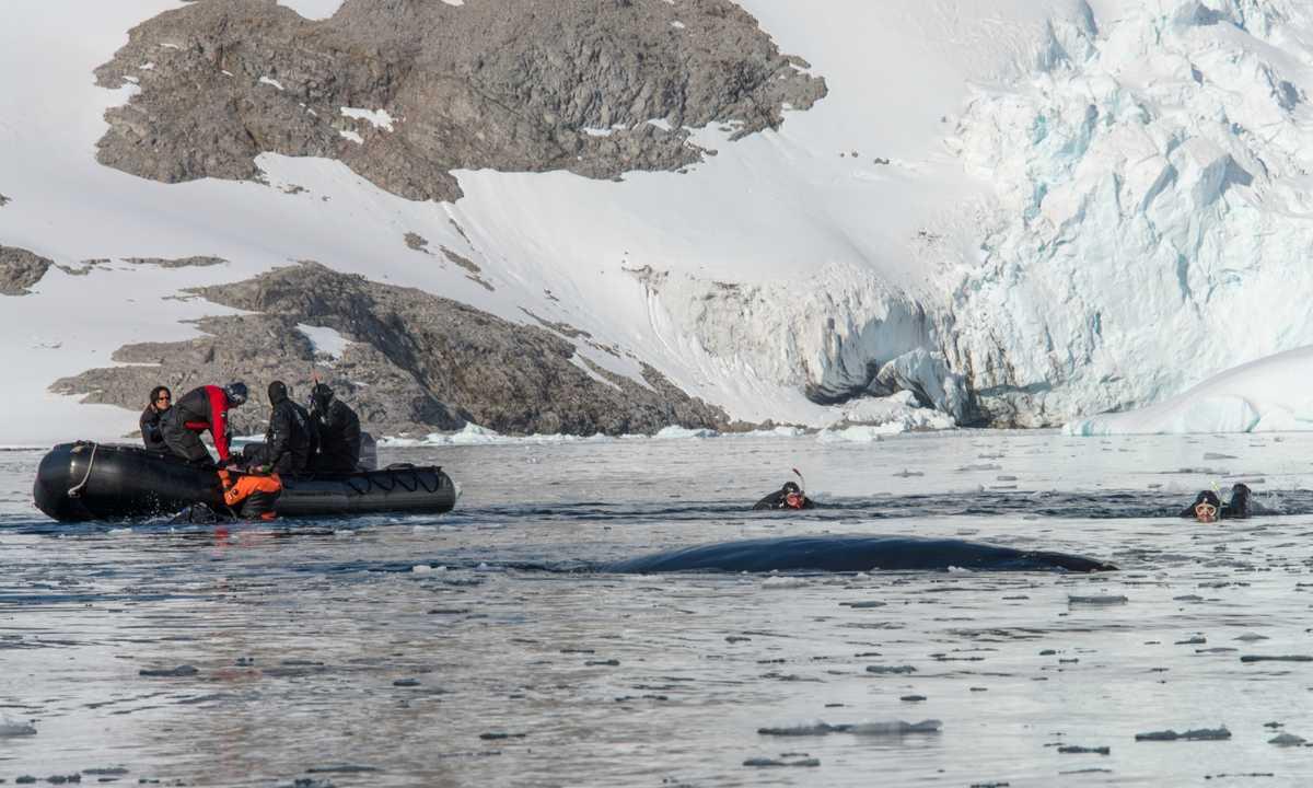 AUR_3_AUR_RTD_Zodiac_whale_snorkeling_e