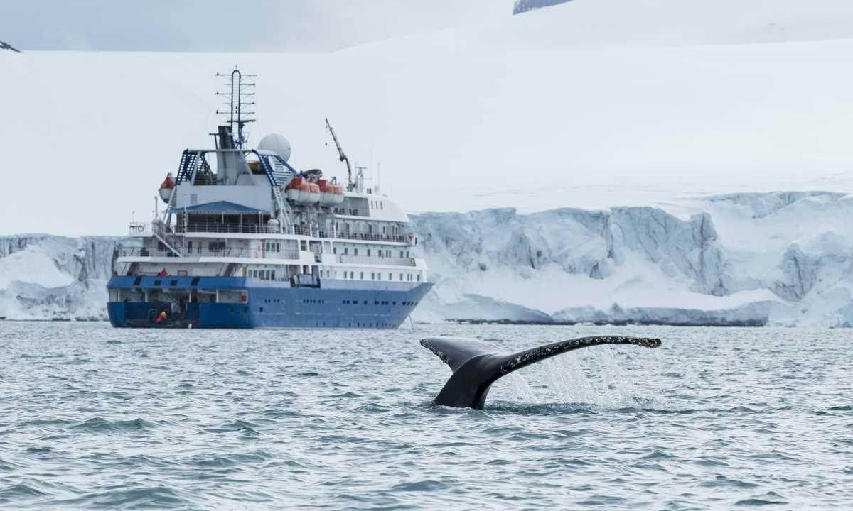 AXXI_4_AXXI_RTD_Hebridean-Sky-whale-e