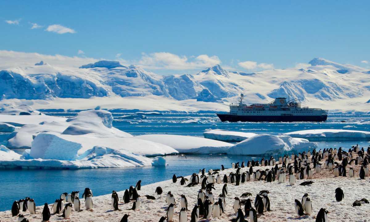 CUS_3_RYAN-BATTLES_PRIV_Ocean_Endevour_penguins-2
