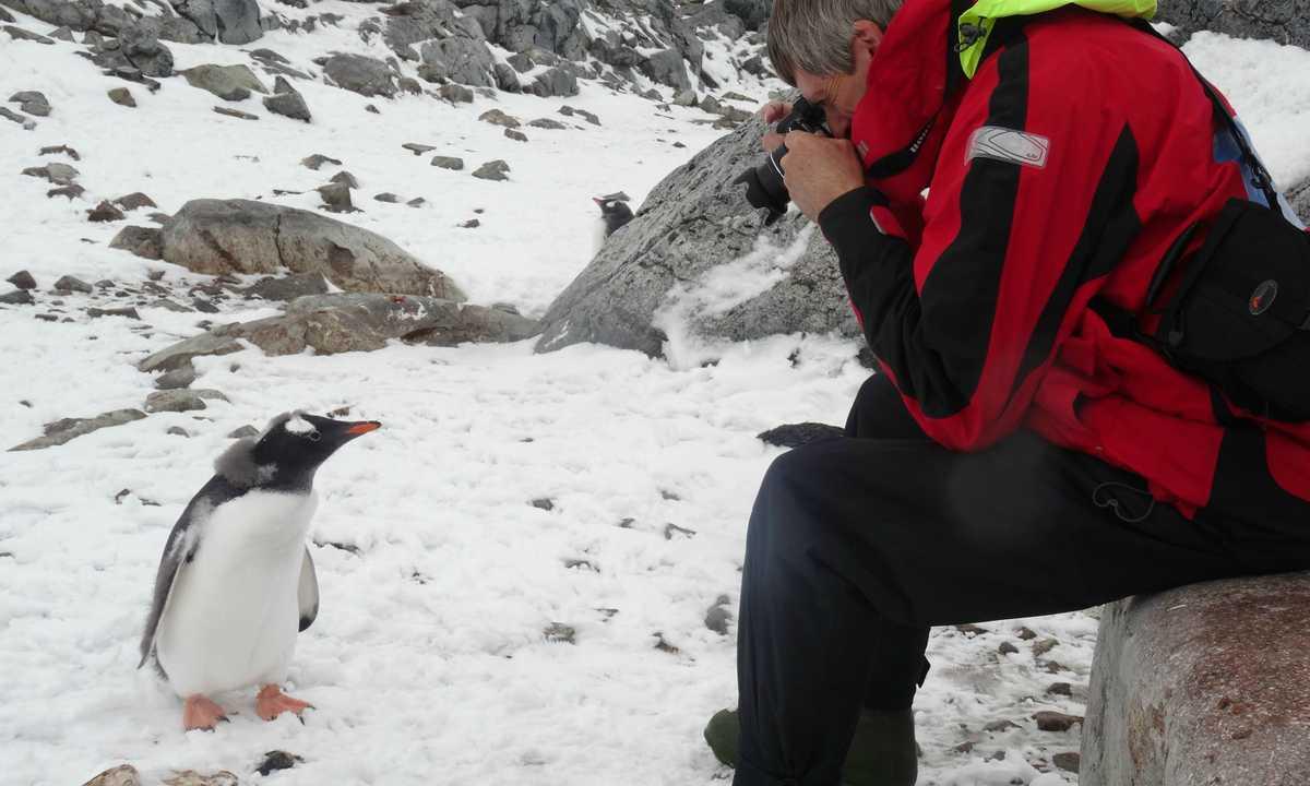 JN_3_JN_ALL_gentoo antarctica photographer EDIT crop
