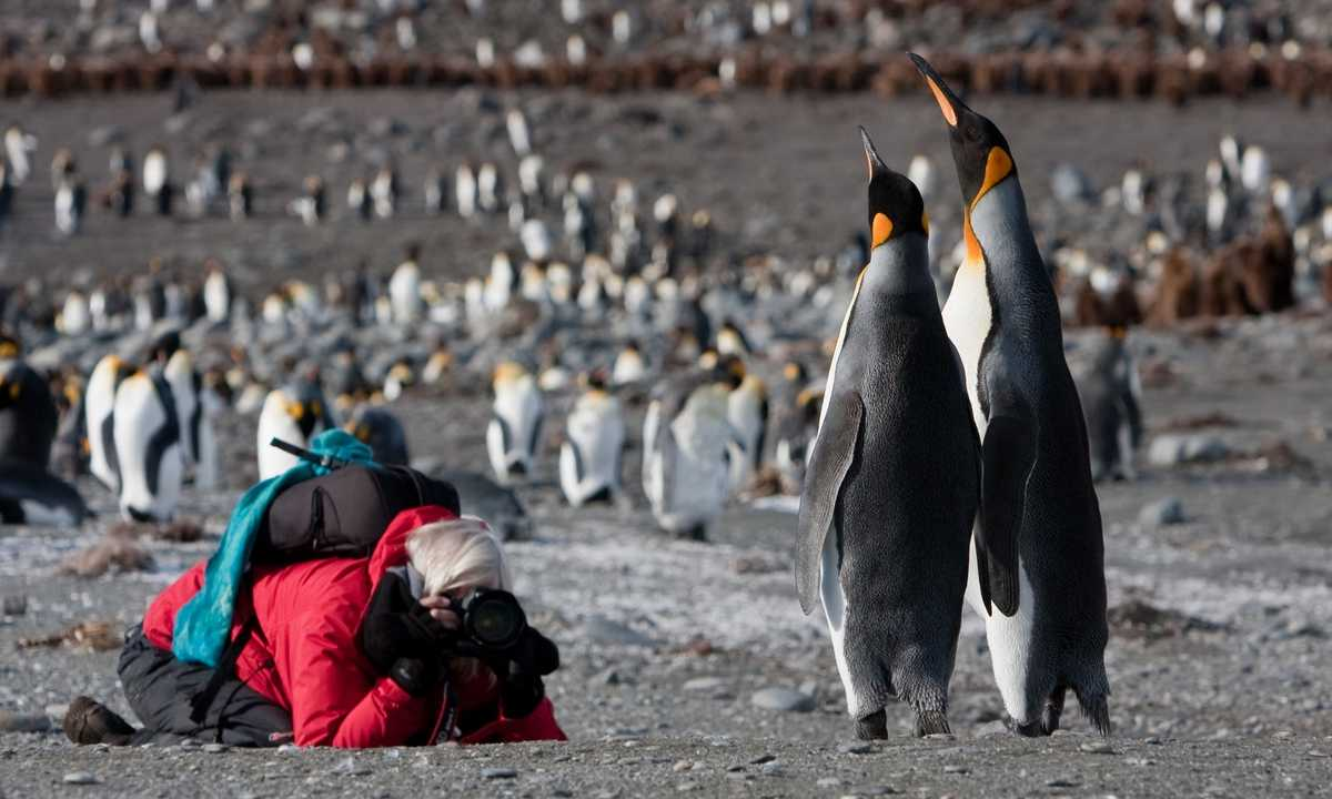 OCE_3_Jan-Veen_RTD_King-Penguins-photographer