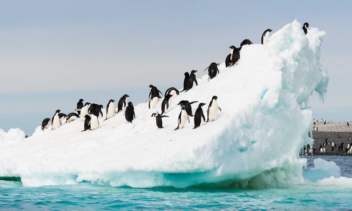 SHU_3_SHU_ALL_Adelie-penguins-iceberg-e