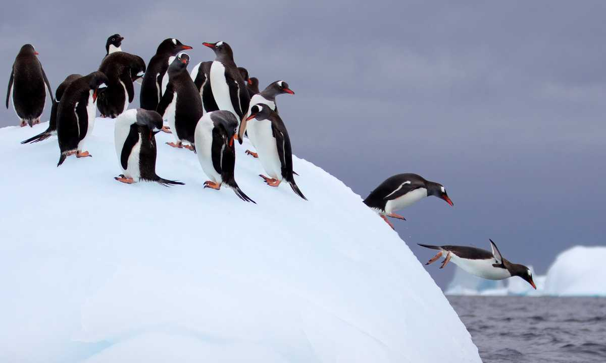 SHU_3_SHU_ALL_Iceberg penguins_e3