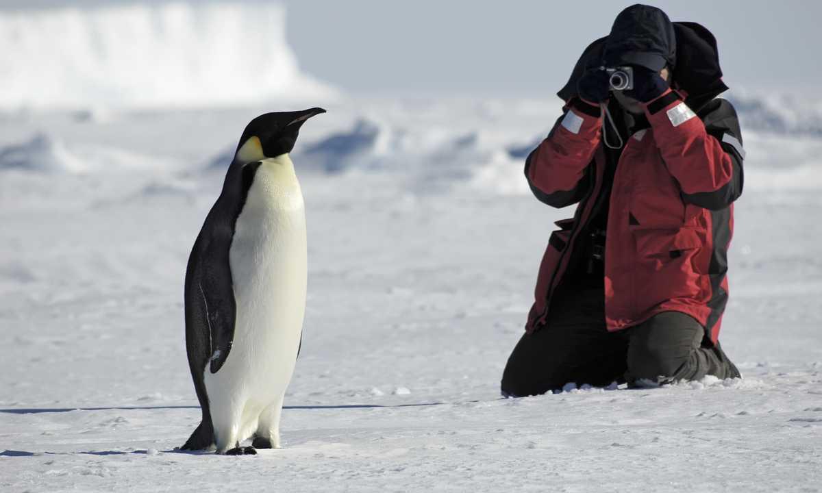 SHU_3_SHU_ALL_phoographer-penguin-antarctica