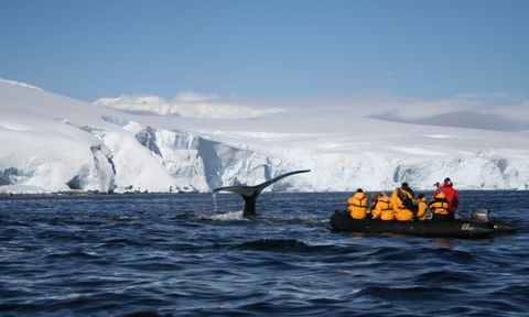 What To Expect On An Antarctic Expedition Cruise