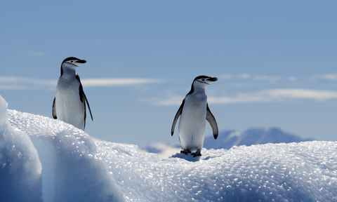 Antarctic Peninsula Cruises
