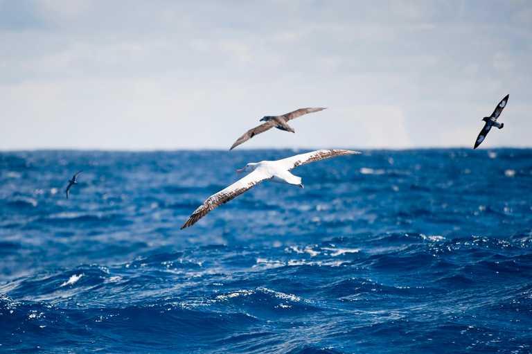 AUR_3_Mark-Jones_RTD_Albatross