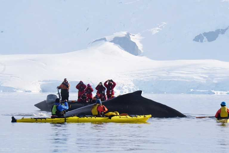 CUS_3_Renee-Park_PRIV_Kayakers-whale-Antarctica