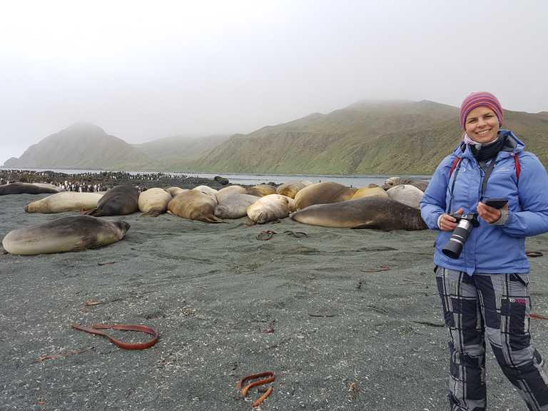 CassiaJackson_4_CassiaJackson_ALL_Elephant-seals-Macquarie-Island