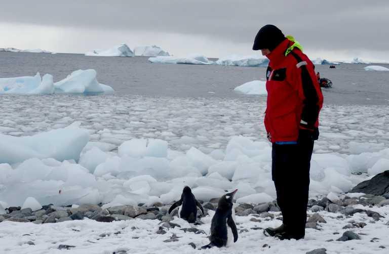 JN_3_JN_ALL_gentoo penguin hello EDIT crop