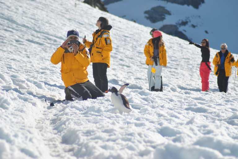 JN_3_SW_ALL_photographer_penguin