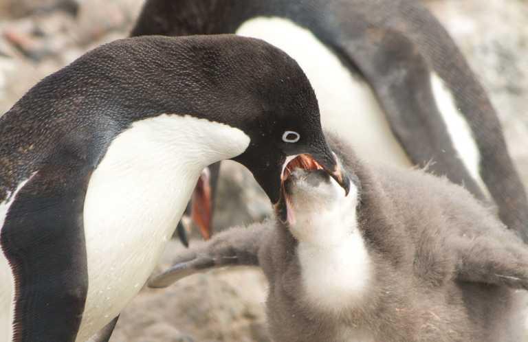 LF_3_LF_ALL_feeding chicks february EDIT