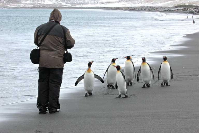 PL_3_PL_RTD_Falklands_kings_photographer
