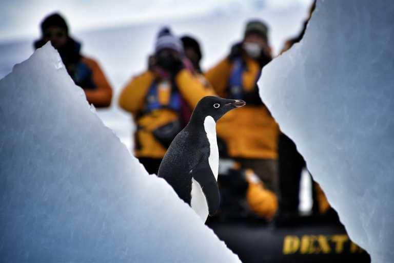 QUA_3_A_RTD_penguinwithphotographers