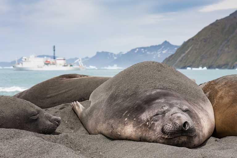 SHU_3_SHU_ALL_Elephant-seal