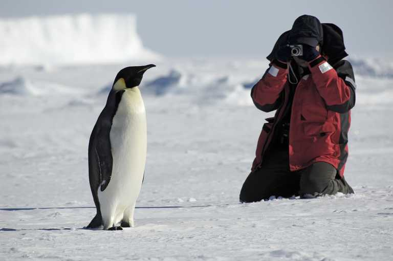 SHU_3_SHU_ALL_phoographer-penguin-antarctica
