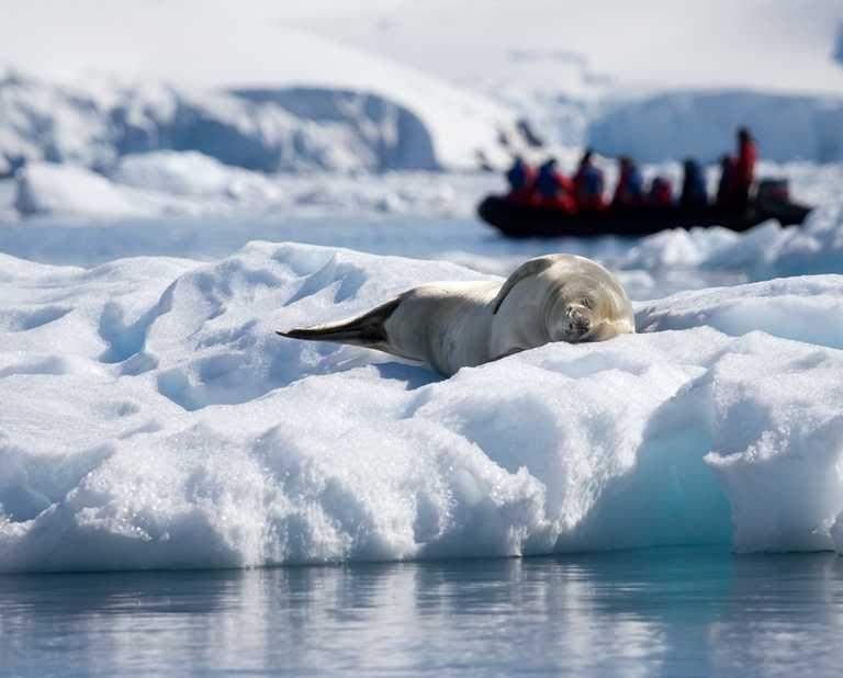 SHU_4_SHU_ALL_seal zodiac Antarctica-e