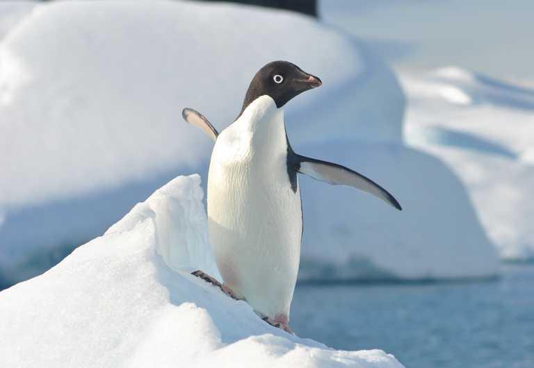 SW_3_JN_ALL_Adelie-Antarctica-December