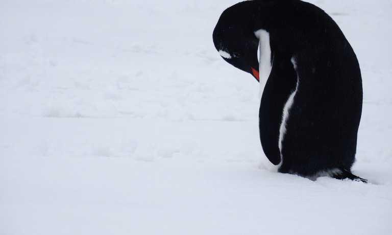 South Shetland Islands & Antarctica Voyage