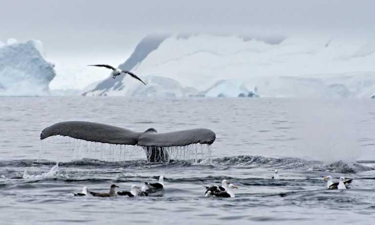 Antarctica Cruises February 2020