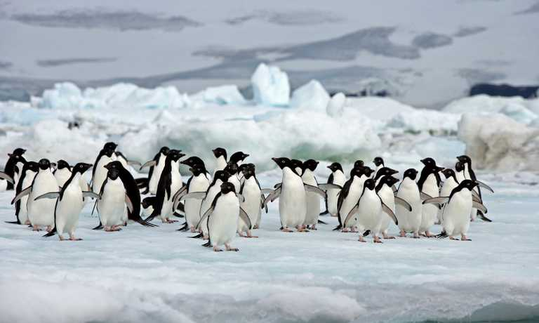 Antarctic Peninsula Expedition