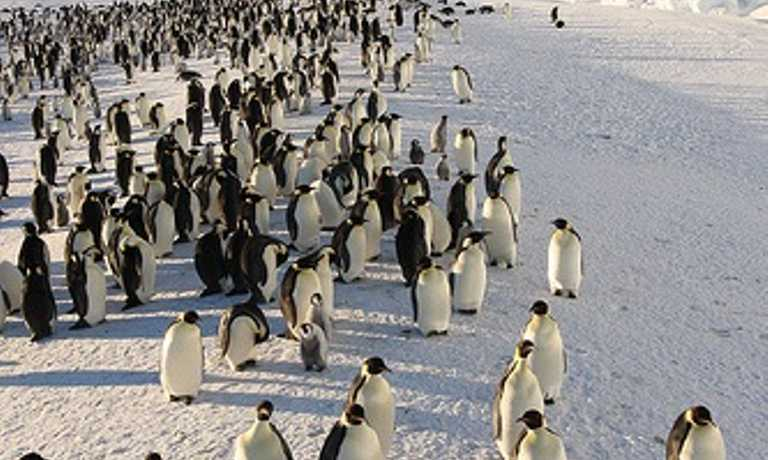 Camp with Emperor Penguins