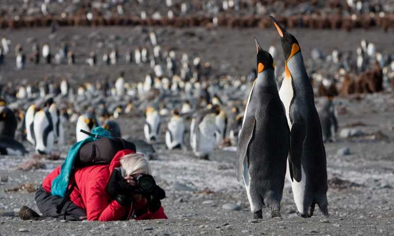 Falklands, South Georgia & Antarctic Adventure