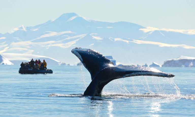 Antarctic Peninsula Whale Safari
