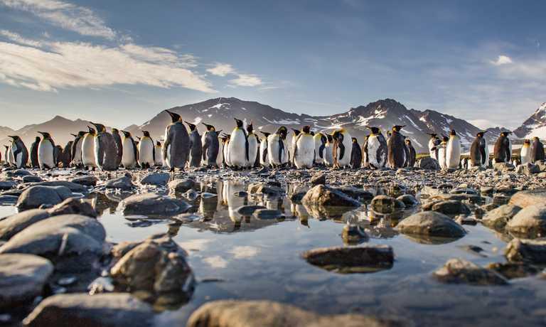 Antarctica, Falklands & South Georgia in Comfort