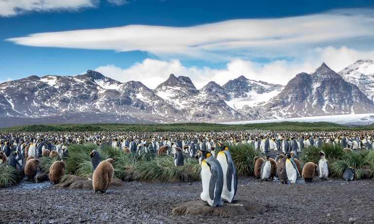 Antarctica, South Georgia & Falklands In Style