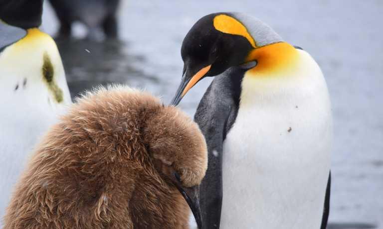 Ultimate Antarctica: South Georgia & Antarctic Circle