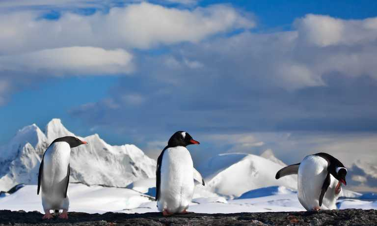 Antarctic Fly & Cruise Safari