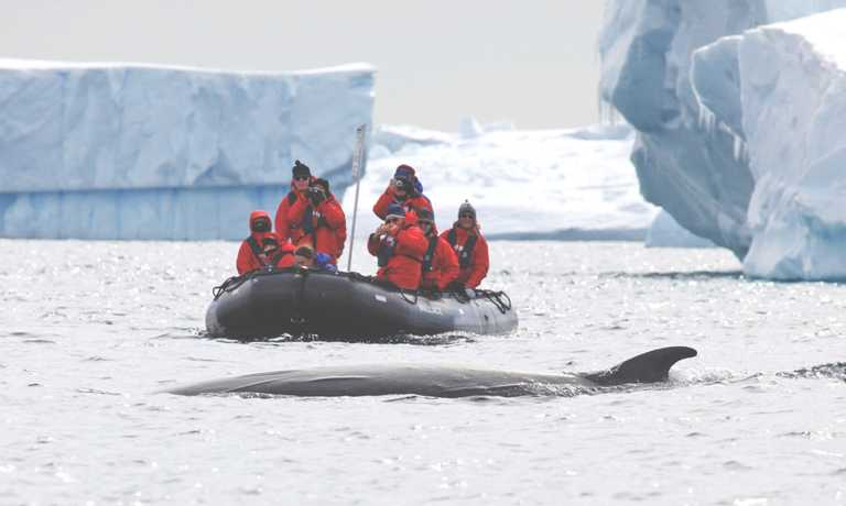 Highlights of the Antarctic Peninsula