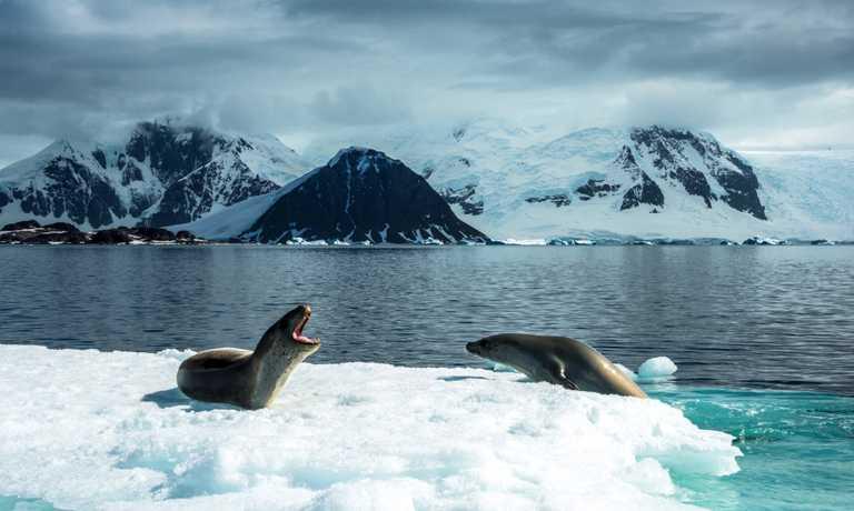 Antarctica Cruises 2018