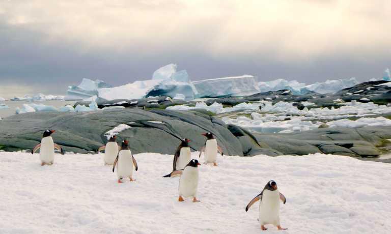 Antarctica Cruises March 2019
